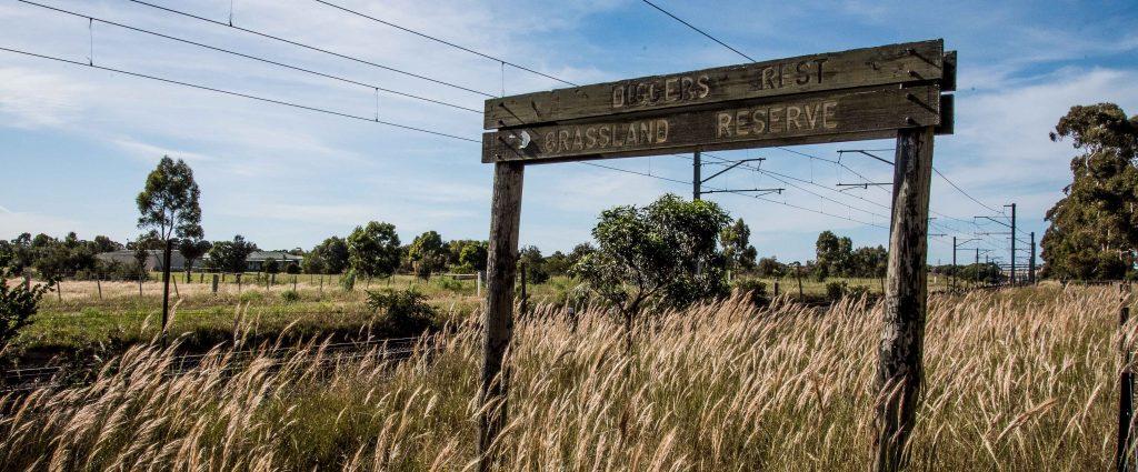 Grasslands at Diggers Rest